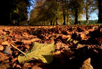 Autumn Leaves, Clumber Park, Nottinghamshire