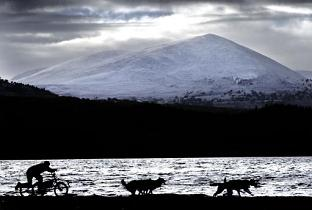 Huskies preparing for Sled Dog Rally, Cairngorms, Scotland