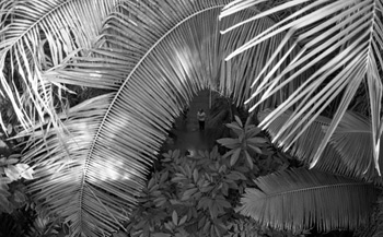 Palm Fronds, Kew Gardens