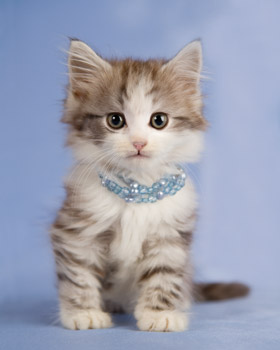 Kitty with Necklace