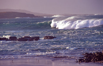 Storm Waves and Shore Birds, Co. Donegal
