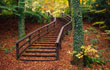 Autumn Stairway, Castle Caldwell Forest Park