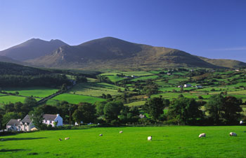 Green fields beneath Mourne Mountains, Co. Down