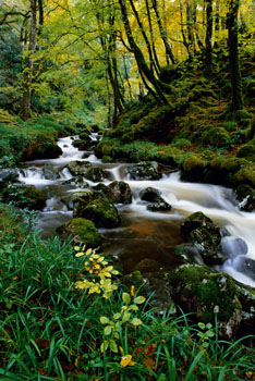 Woodland and Stream in Glenveagh National Park, Co. Donegal