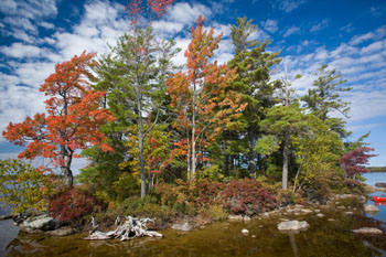 Autumnal Colours, Maine, New England, USA