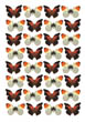 Stinky Leaf Wing/Orange Tip Butterfly Wallpaper