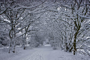 Pathway through Snowy Trees, near Wylam, Northumberland