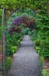 Arch with Rosa 'Crimson Showers' and Clematis 'Etoile Violette'