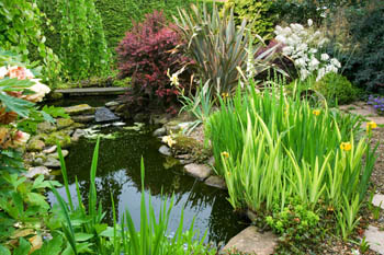 Pond with Iris Pseudoacorus Variegata