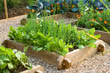 Wooden Raised Bed with Leaf Beet Perpetual Spinach