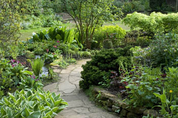 Brick Path through Bog Garden with Hostas and Primulas