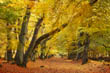 Berkhamsted Common, Herts, in Autumn