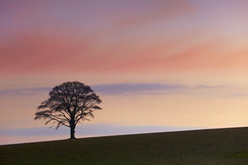 Twilight Simplicity - East Sussex Hilltop