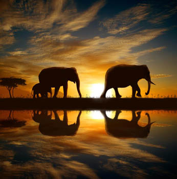 Sunset Elephant Walk