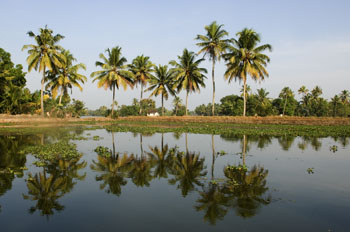 Backwaters - Kerala, India