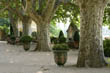 Gravel Terrace with Plane Trees and Box-planted Urns, Provence