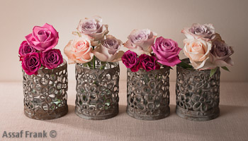 Roses in Pots on Cream