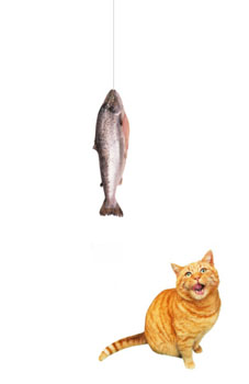 Cat looking up at Fish on Line