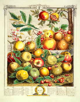 May, from The Twelve Months of Fruit